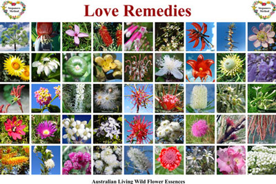 Pictures of the Australian Bushflowers Love Remedies